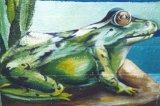 image frog-jpg