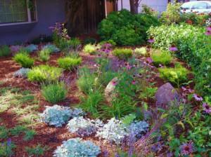 california-drought-tolerant-plants